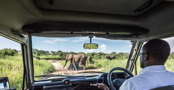 Caution: Elephant Crossing